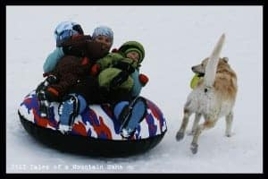 Tube in a Box Large Tube