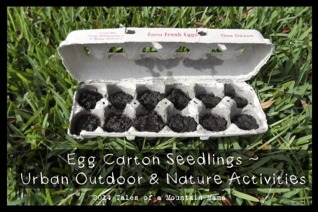 eggcarton1