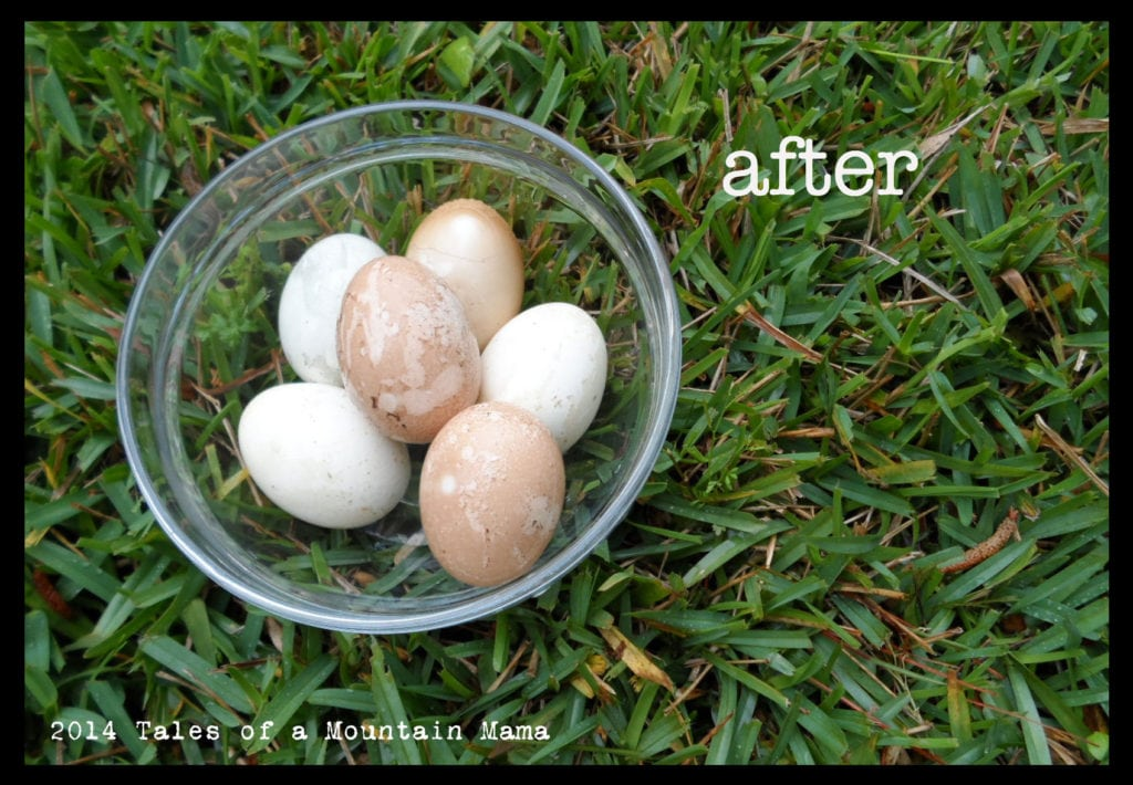 after.eggs