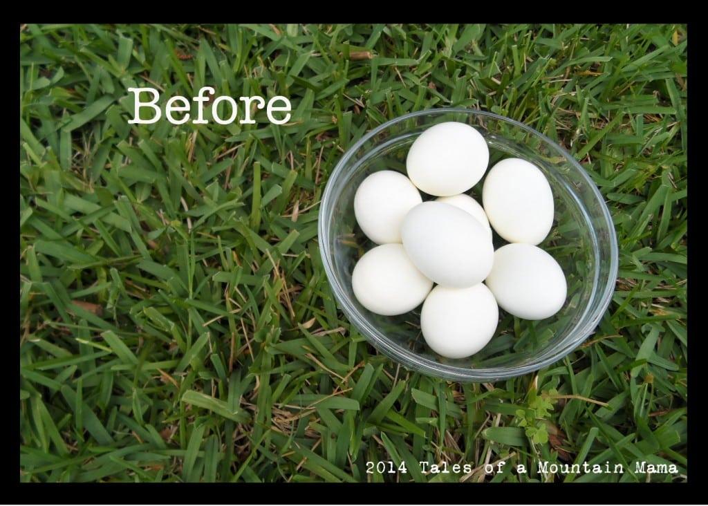before.eggs1