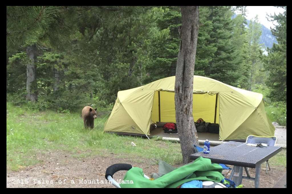 When a Bear Wanders into Camp + Leave No Trace Tips