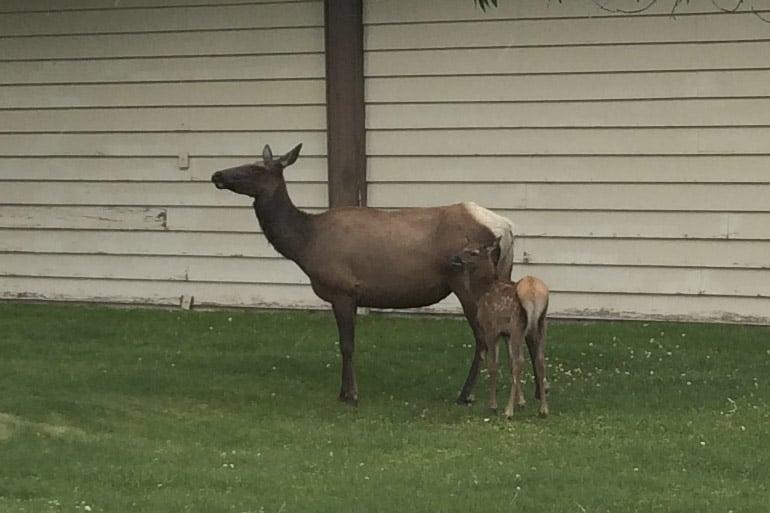 It's Baby Season! Tips to Respect Wildlife.