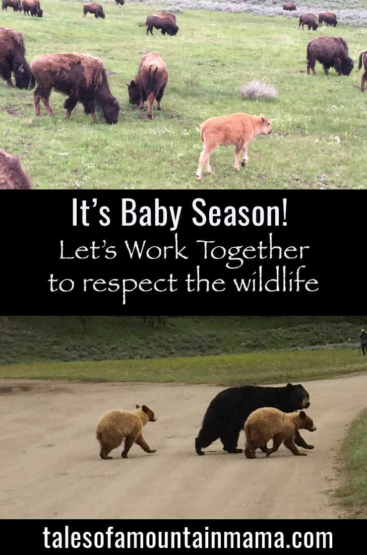 It's Baby Season! Tips to Respect Wildlife.