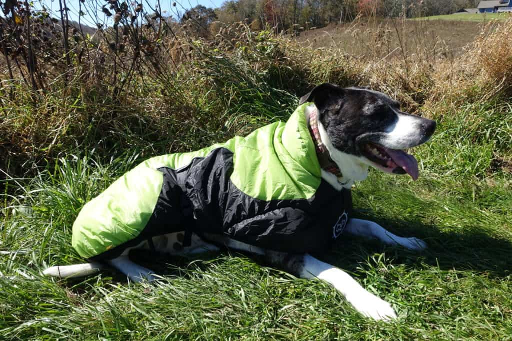 hiking dogs in puff doggy jacket