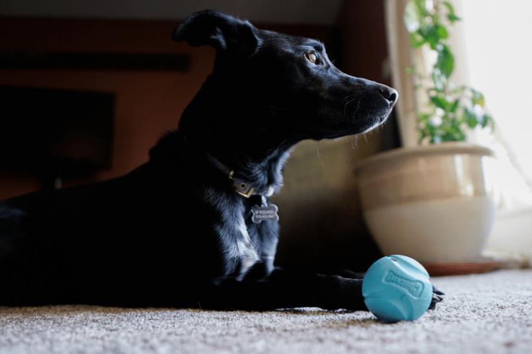 Best Outdoor Dog Gear