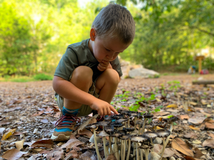 let kids learn about nature while they hike