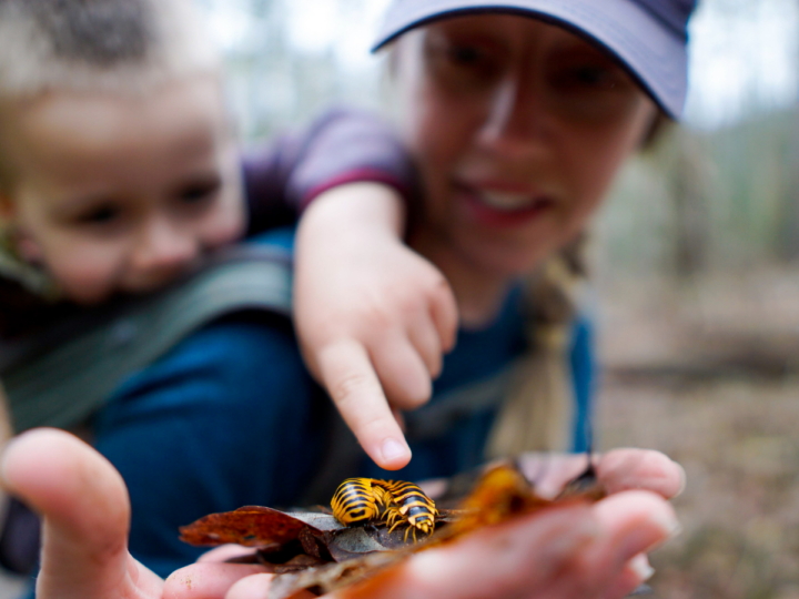 teach kids about nature on hikes